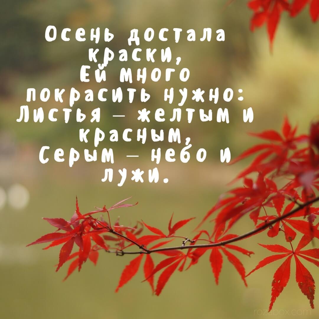 Анекдоты картинками, открытки с красивыми стихами про осень