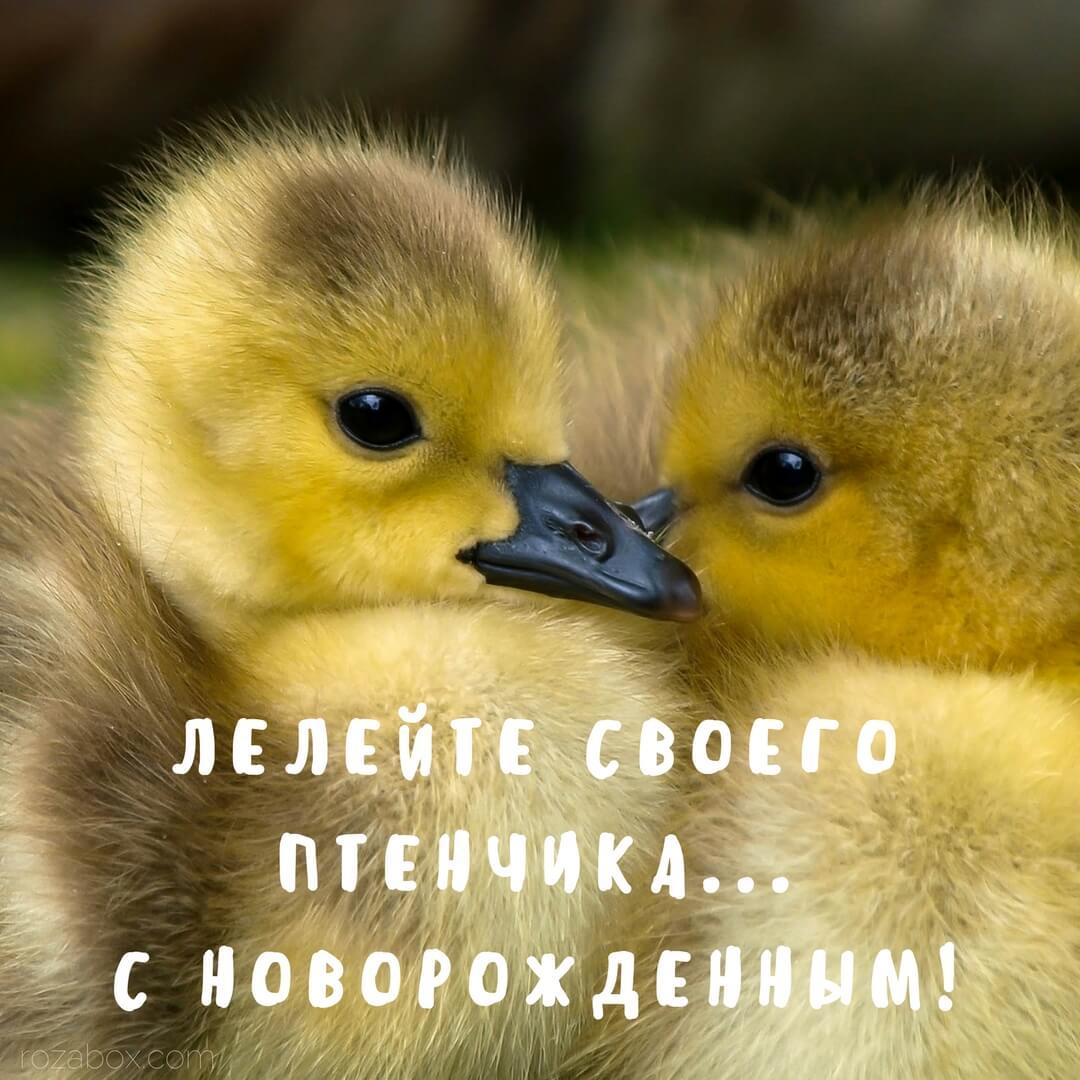 Сапсан Москва Питер цена 2019
