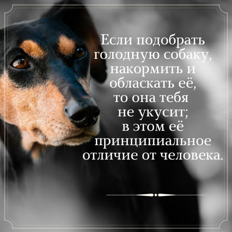 Собака будет спать на холодной земле, где дуют холодные ветры и яростно метет снег, только бы быть рядом с хозяином.