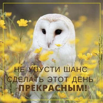 желтая открытка с совой