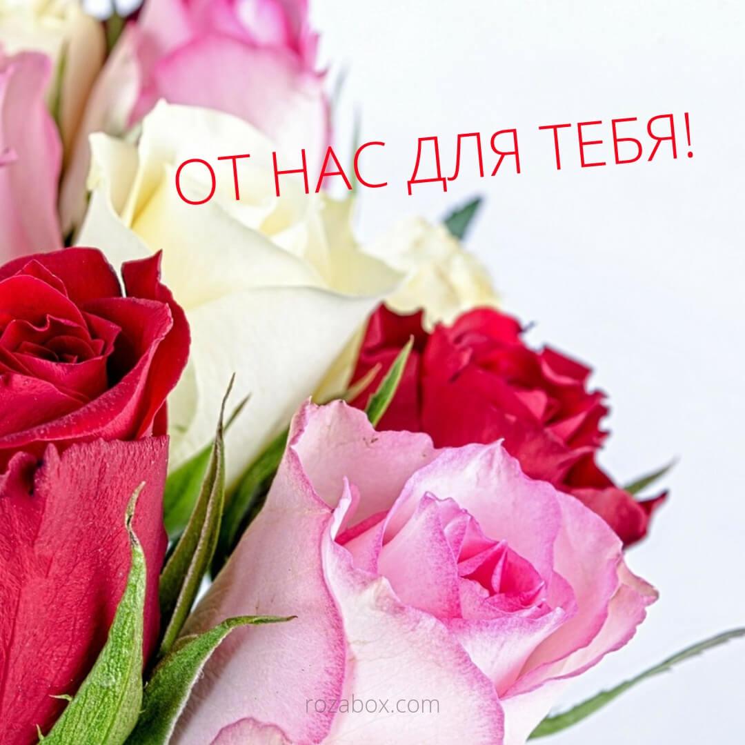 розы для тебя открытка