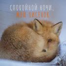 открытка спокойной ночи мой лисенок